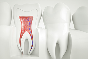 Animation of interior part of tooth